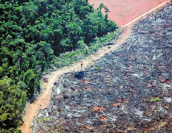 """Área queimada no município de Nova Ubiratã, no """"arco do desflorestamento"""", no Mato Grosso - Folha Imagem"""