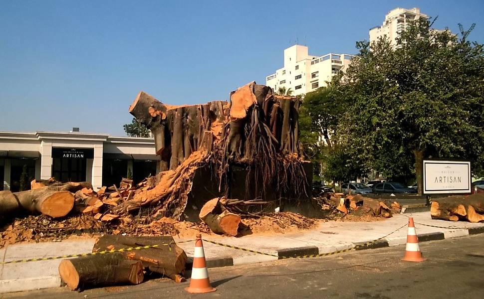 Resto de figueira derrubada em 6 de julho no Ipiranga, em São Paulo, para dar lugar a um empreendimento imobiliário. Imagem: Sara Santos/Divulgação