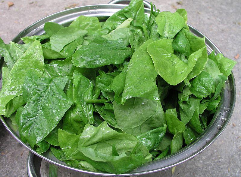 Folhas de espinafre, alimento que há décadas erroneamente conhecido como um dos mais ricos em ferro. Imagem: Nillerdk/Creative Commons
