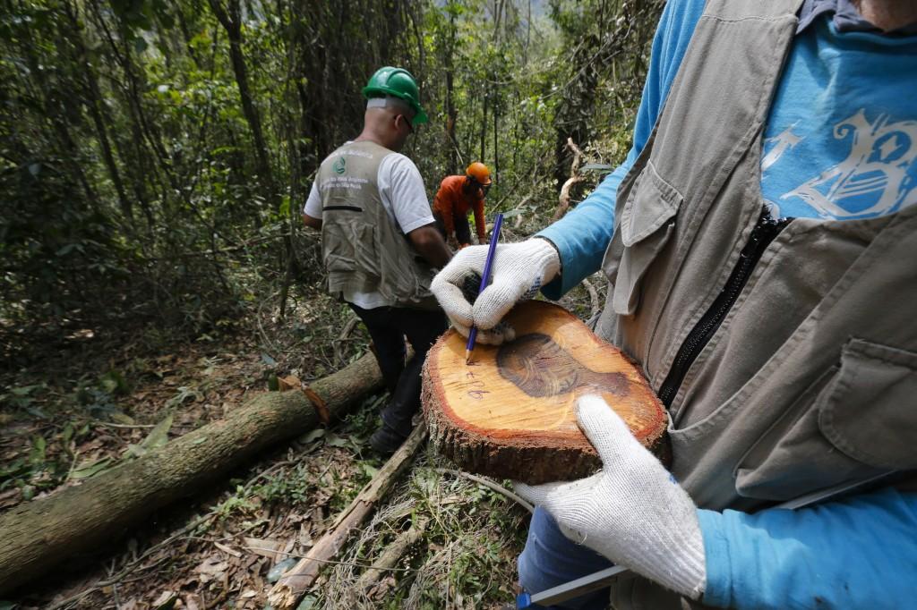 Pesquisadores da USP e do Instituto de Botânica recolhem amostras de troncos de árvores em área de Mata Atlântica, na serra da Cantareira, para calcular armazenamento de carbono. Imagem: Moacyr Lopes Júnior/FolhaPress, 25.set.2014