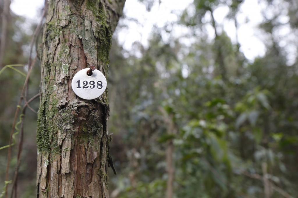 Depois de dividir a área de estudo de 0,8 hectare em dez parcelas, pesquisadores da USP e do Instituto de Botânica fizeram um inventário das árvores a serem cortadas e analisadas. Imagem: Moacyr Lopes Júnior/FolhaPress, 25.set.2014